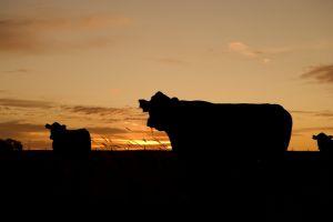 Innovatieve concepten voor duurzame landbouw Gelderland