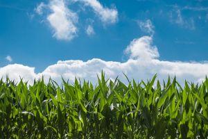 Nieuw budget voor landbouwprojecten Groningen