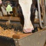 Samenwerking voor innovaties Melkveehouderij Drenthe geopend!