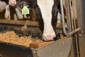 Vermindering melkproductie