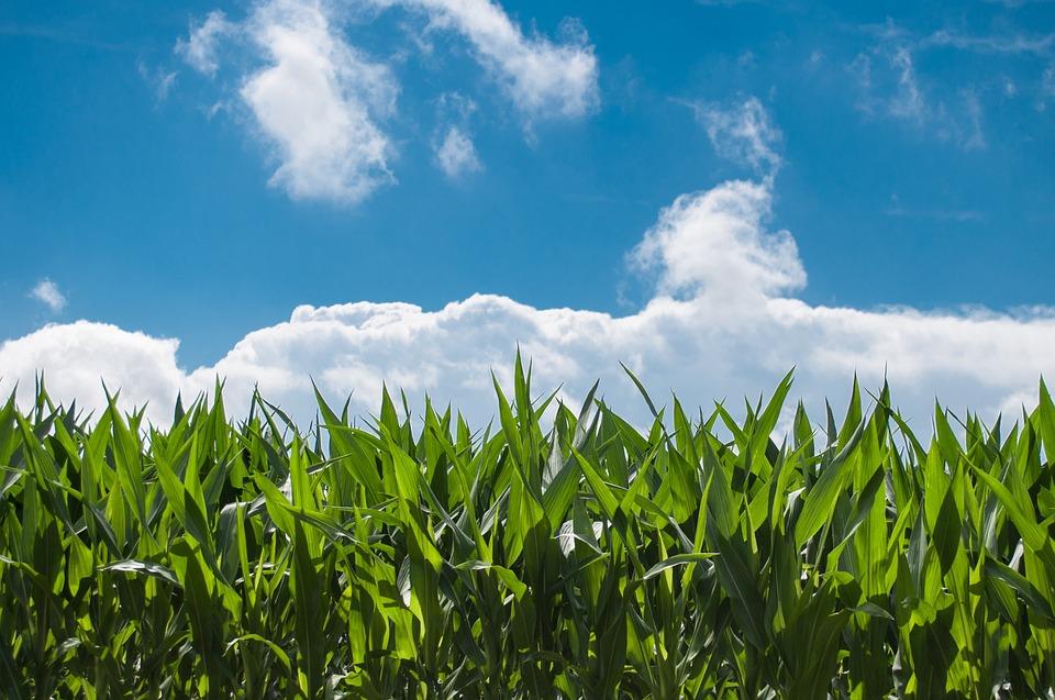 Landbouw subsidies