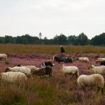 Openstelling LEADER Zuidoost-Drenthe