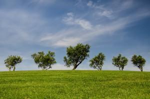 platteland subsidie landschap